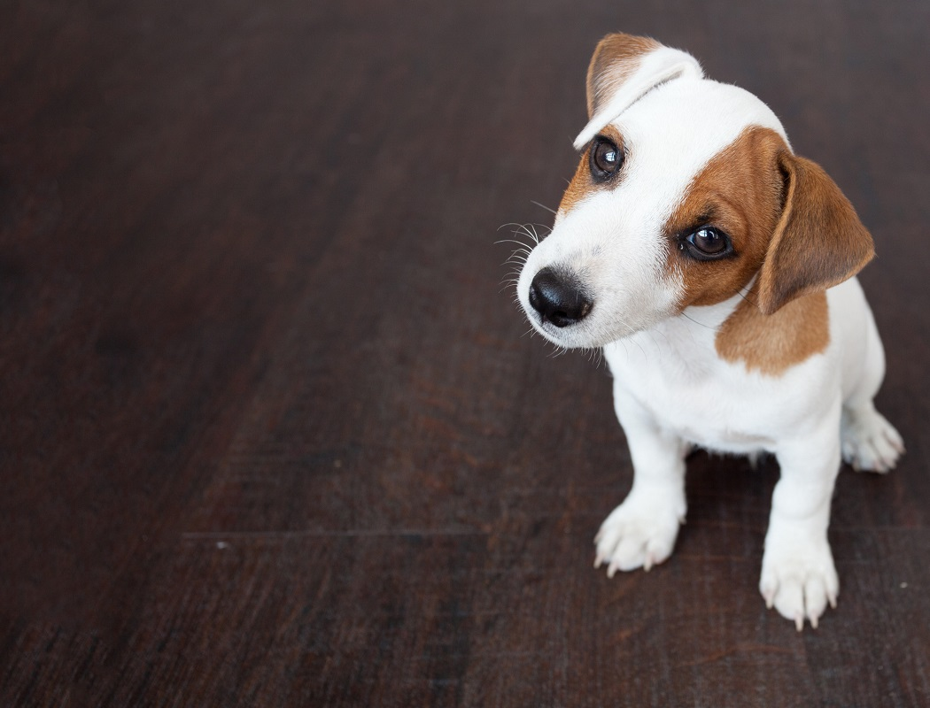 Everyone has heard about using CBD oil for themselves, but what about for your furry friends? Here is a brief introduction to CBD oil for pets.