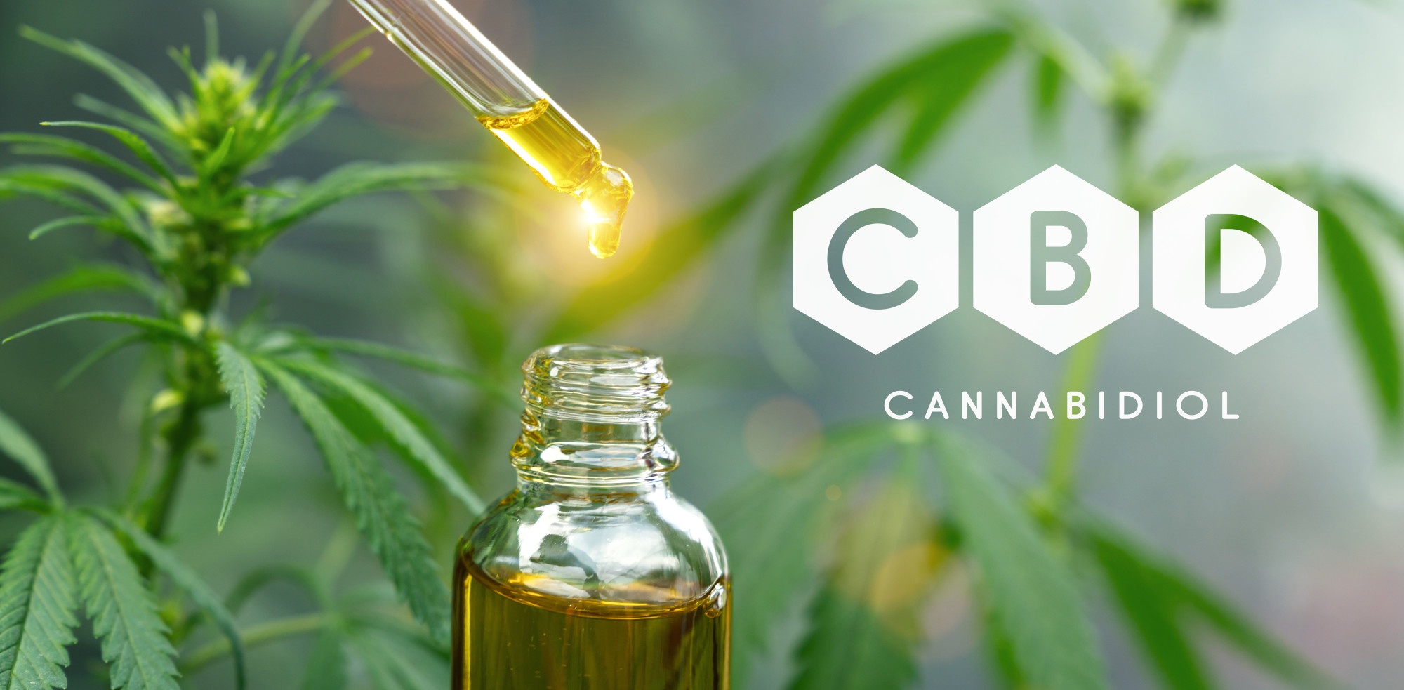 CBD is getting it's fair share of press these days but what is it really good for? These CBD oil facts will give you insight into its uses and benefits.
