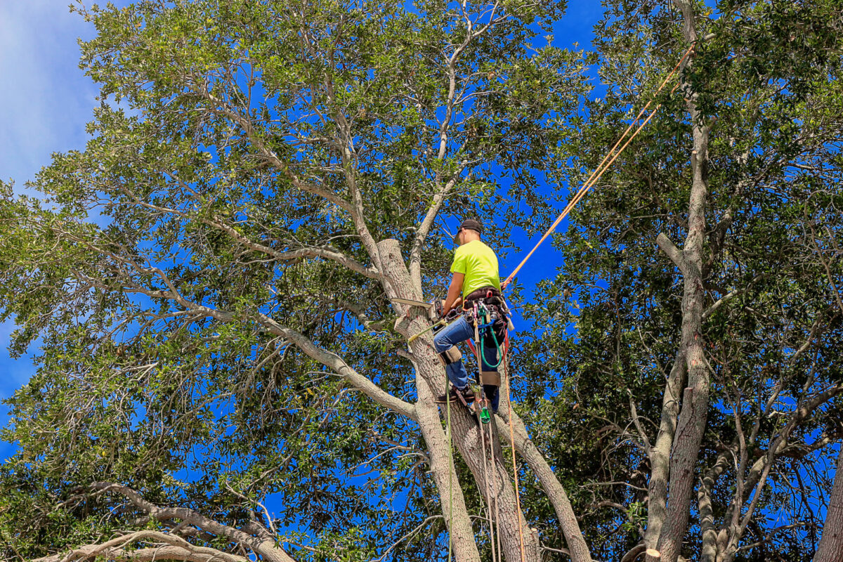 Regular tree trimming can boost your home's curb appeal. Want to learn about some more benefits? Click right here on this guide!