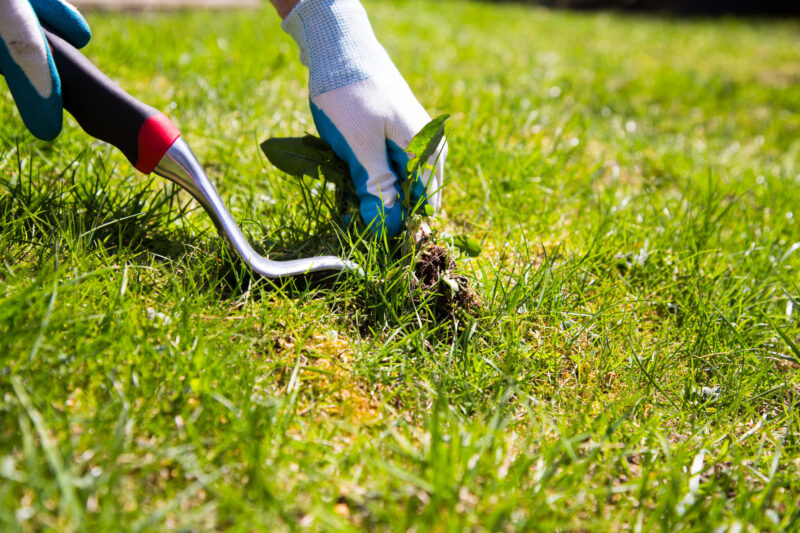 From the simplest lawns to the most ornate landscapes, these yard maintenance tips and tricks are guaranteed to help you out!