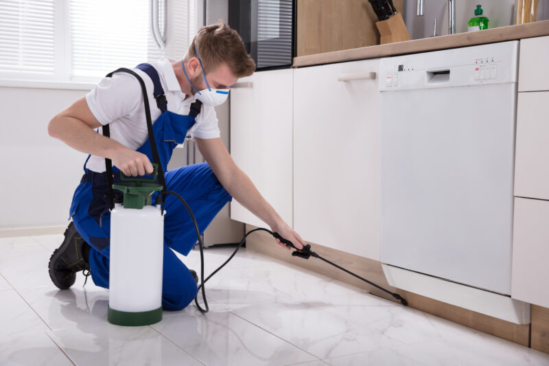 Do you own your home? If so, check out this list of reasons why you need to invest in pest control services for your home.