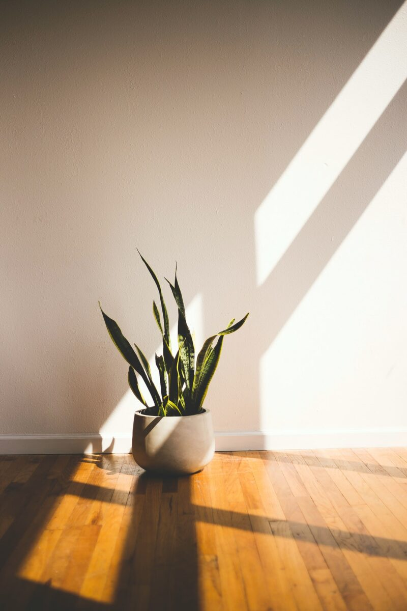 Looking to bring some more life to your space? We sifted through the dirt and found the best indoor plants for any room.