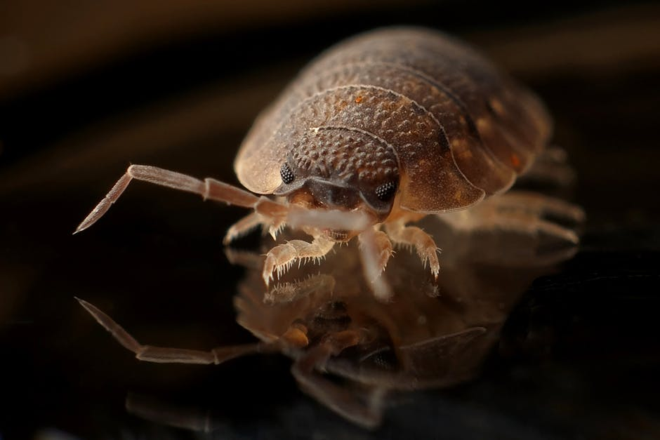 When comparing bed bugs vs ticks, what are the similarities and differences? We explain the facts you need to know about these two pests here.