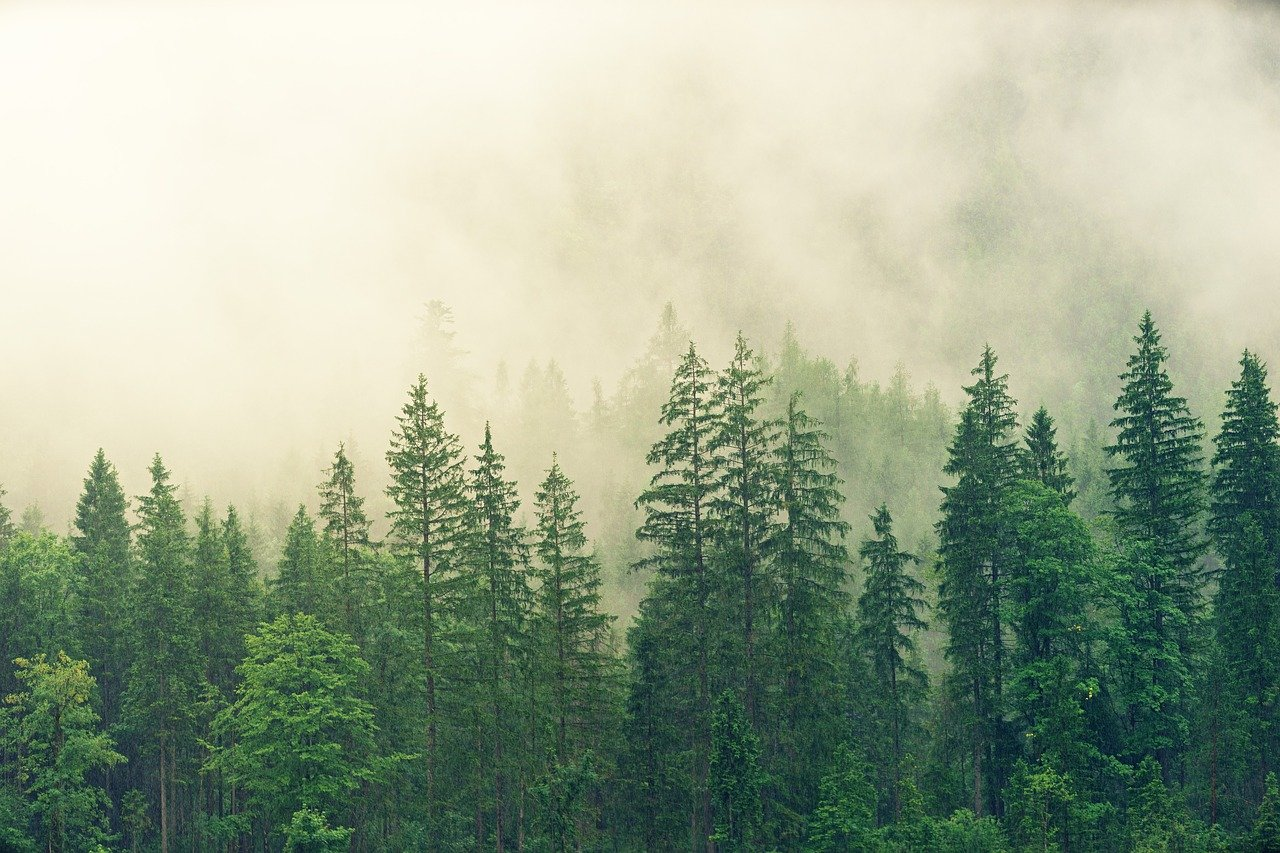 Reforestation is one of the best ways to combat global warming. Trees absorb carbon dioxide, which is one of the greenhouse gases that contribute to climate change.