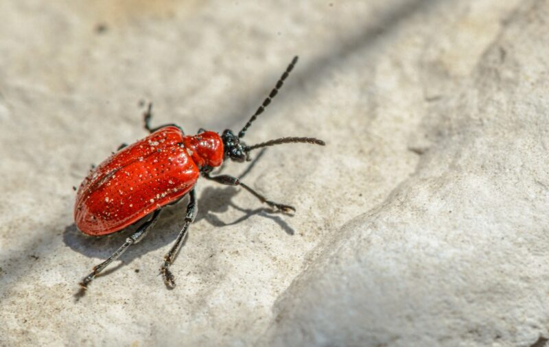 It's important to be able to spot the common household pests if you want to have a pest free home. Our helpful guide here has you covered.